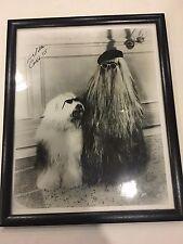 Felix Silla Cousin Itt The Addams Family Autographed Signed 8x10 Photo