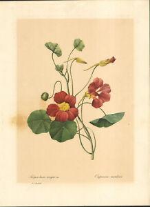 1910 Lithographie Capucine Mordorée Fleur Pierre Joseph Redouté