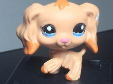 Littlest Pet Shop Cocker Spaniel #1716 LPS Tan Caramel Dipped Ears Blue Dot Eye