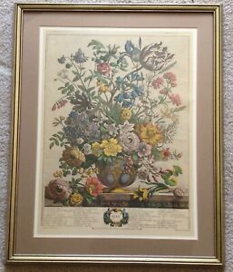 Robert Furber & Henry Fletcher Twelve Months of Flowers May 1730 Etching & Frame