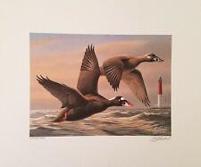 "Limited Edition S//N Print /""Winter Light Mallards/"" by M Buddan Ducks Mallards"