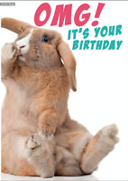 Cute & Funny Humour Birthday Greetings Card from Animal House: OMG Rabbit