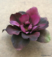 "2.5"" Purple Apple Blossom Silk Flower Hair Clip, Dance,Wedding,Luau,Prom,Bridal"