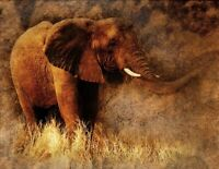 """Elephant Animal Art Abstract Vintage Nature PICTURE CANVAS WALL ART 20""""X30"""""""