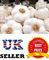 "Garlic 10-100 cloves ""Albigensian wight"" From Bulbs - Viable Seeds - UK SELLER"