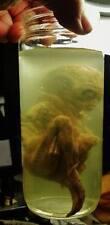 alien jar prop fx replica realistic