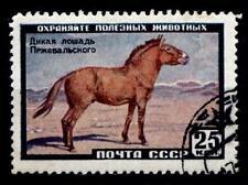 Przewalski-Pferd. 1W. Gest. UdSSR 1959
