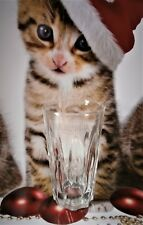 Finlandia Vodka Glass New/Unused 34cl / 11.5oz