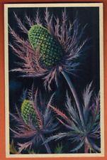 Carte Postale -Chardon Bleu - Alpes - Fleur -Flore-Edition d'Art André -Réf/B.71