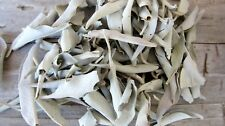 California White Sage Loose Clusters 4 oz Not Cleaned Smudging Healing Ritual