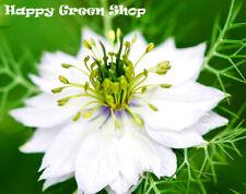 LOVE IN A MIST WHITE  - AFRICAN BRIDE - 1000 SEEDS  - Nigella hispanica - FLOWER
