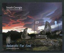 South Georgia & Sandwich Isl 2018 MNH Antarctic Fur Seals 1v M/S Animals Stamps