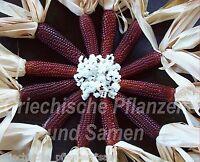 roter Mais Erdbeer-Mais* Popcorn * Dekoration * 6 Samen