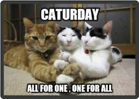 Funny Cat Humor Caturday Refrigerator Magnet