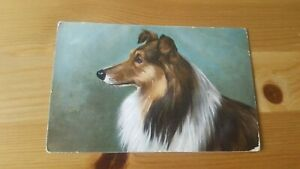 Old Postcard Collie Dog in Colour - Postmarked May 1905