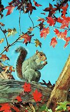 VINTAGE FULL COLOR UNPOSTED POSTCARD OF A SQUIRREL IN A TREE EATING