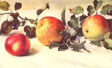 APPLES. Gascoyne's Scarlet; Charles Ross; Allington Pippin 1912 old print