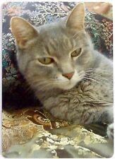 Swap Card. Abyssinian Cat. Blue Cream Coat. Modern Linen Finish. Wide. Mint