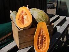 Pumpkin Gramma (20seeds) - Organic Heirloom from Life-Force Seeds