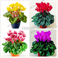 100 PCS Seeds Cyclamen Bonsai Flowers Potted Balcony Rabbit Plants Garden NEW I
