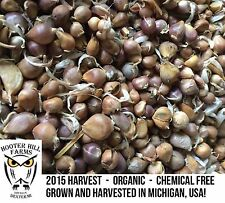 Garlic Seeds White Hardy Michigan USA Organic 10 Seeds (bulbs) Grow Your Own