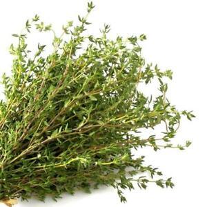 Common German Winter Thyme Herb Seeds    B195