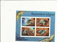 ASCENSION ISLAND - 1994 GREEN TURTLES MINATURE SHEET UNMOUNTED MINT