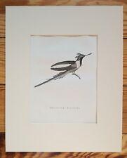 HUMMINGBIRD, 1826 ORIGINAL PRINT, Antique ENGRAVING, Matted 8X10 ornithology
