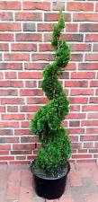 Thuja Spirale, Höhe: 140-150 cm, Smaragd - Edelthuja + Dünger