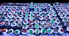 200 CURED REEF LARGE FRAG PLUGS LIVE CORAL PROPAGATION
