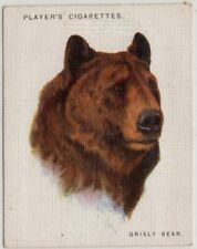 Grizzly Brown Bear North America 1930sTrade Advertising Card