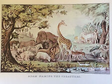 Vintage Currier and Ives Print Adam Naming The Creatures 1952 Bible Genesis Lion