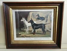 English Terriers Chromolithograph Manchester Terrier Mini Pin London 1881 Framed