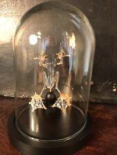Véritable Grenouille Sous Cloche Globe En Verre- Cabinet De Curiosité - Deco