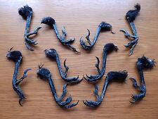 10  Dry Crow Feet  Taxidermy  Pagan  Arts & Crafts  Wierd