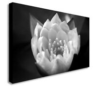 Black & White Flower Close Up Floral Canvas Wall Art Picture Large+ Any Size