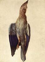 Nice Oil painting Albrecht Durer still life Dead Bluebird canvas hand painted