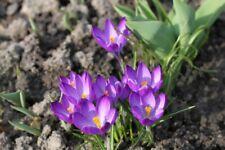 15G 100% organic Saffron -zaffron SPECIAL OFFRE