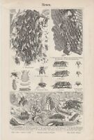 1895 BEE BEES BEEKEEPING APIARY BEEHIVE Antique Engraving Lithograph Print
