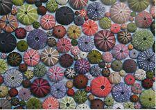 Piatnik Sea Urchins 1000 pc Jigsaw Collage