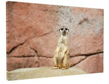 MEERKAT ANIMAL CANVAS PICTURE PRINT WALL ART CHUNKY FRAME LARGE 1853-2