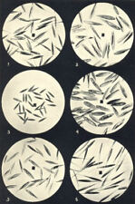 FESCUE GRASS SEEDS. Festuca duriuscula, elatior, ovina, pratensis, rubra 1912