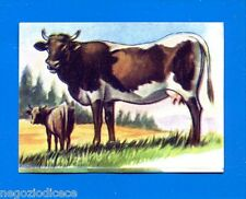 ANIMALI - Lampo 1964 - Figurina-Sticker n. 128 - MUCCA -New