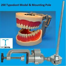 Dental Typodont Model 200 works with Kilgore brand teeth & Mounting Pole