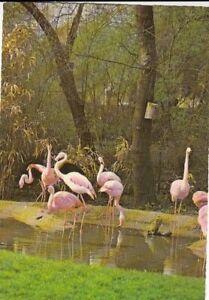 Tiere: Flamingos gl1976 G5324