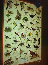 Vintage Birds of Field and Garden 26.5x38 MF1259 Edizioni Beatrice D'Este-Milano
