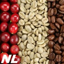 20 Coffee Bean Tree Seeds Arabica Organic Garden Perennial Plant Growing Houses
