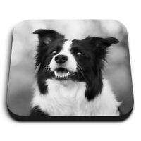 Square MDF Magnets - BW - Black & White Border Collie  #42571