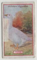 Commercial Value Of The Goose Bird 90+ Y/O Trade Ad Card