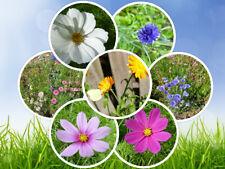 30 Samenbomben für Bienen Blumensamen Seedballs Seedbombs Gastgeschenk Hochzeit